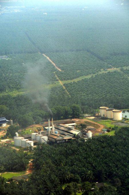 Plantación aceite de palma Malasia