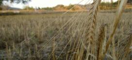 El otoño de la civilización (y la ruptura de la cadena de suministros)